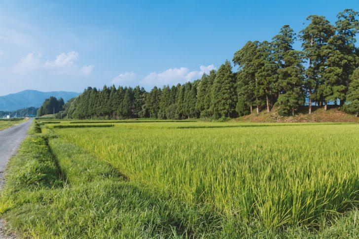 田舎の風景 画像
